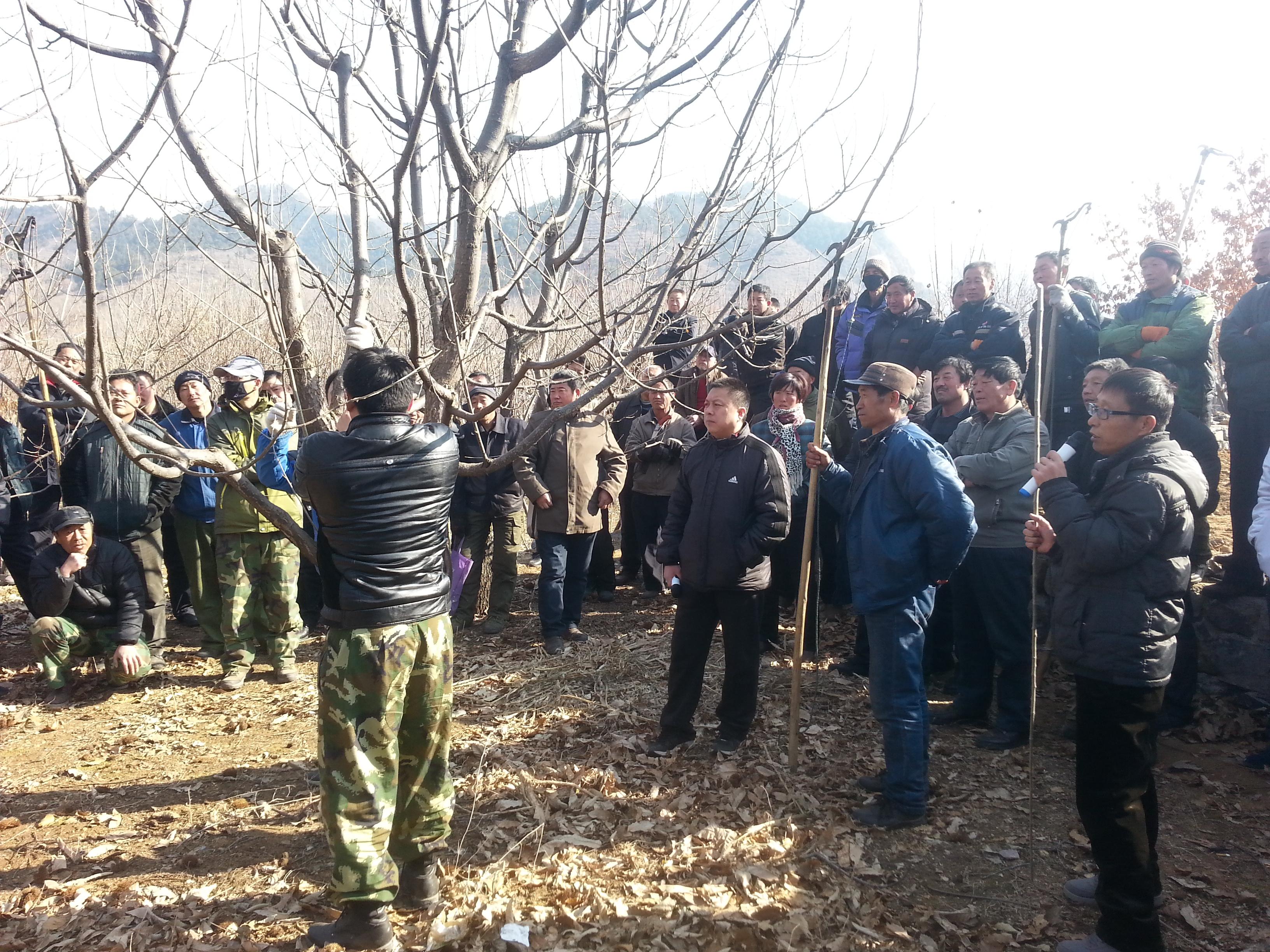 六道河镇举办板栗树体改造项目培训班